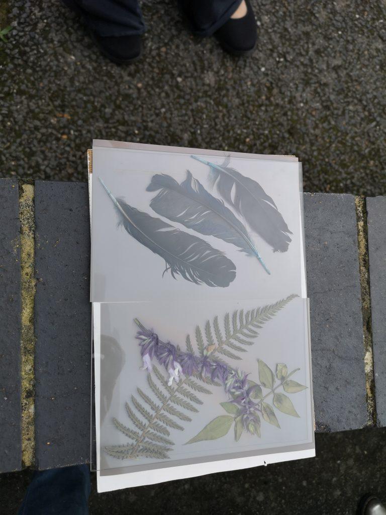 Lumen print workshop/ exposing prints/ alternative photographic process/ art print