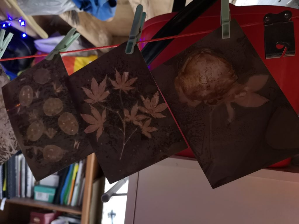 Lumen print workshop/ drying rack/ alternative photographic process/ art print