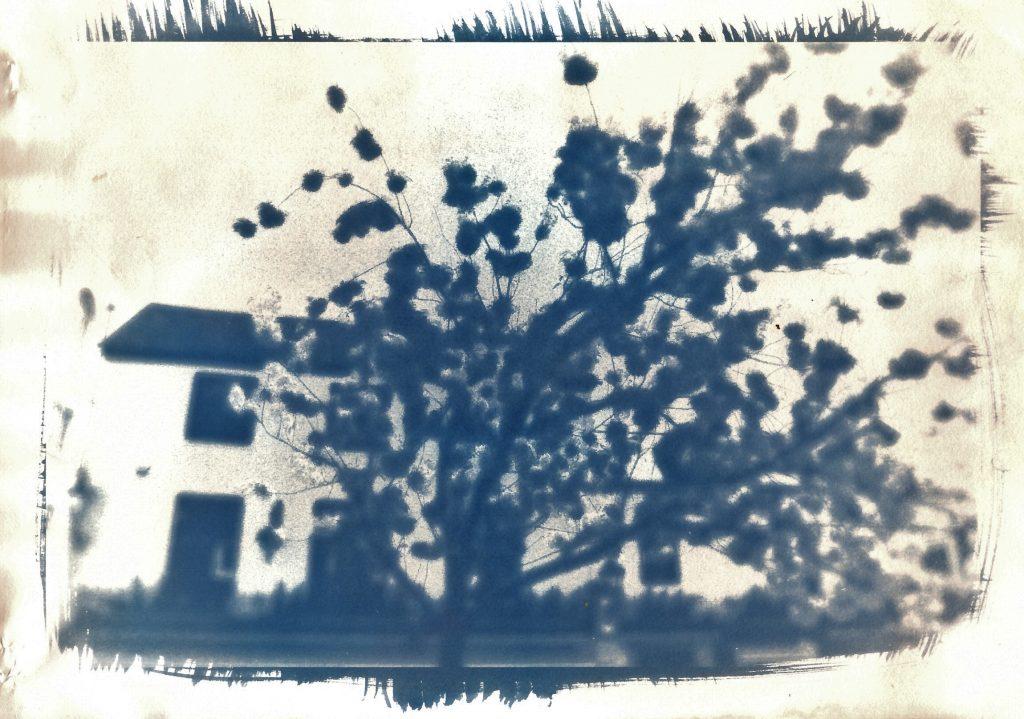 Cyanotype toned with selenium/ Brighton city centre