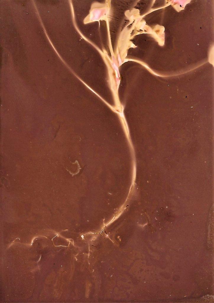 A lumen print of a nasturtium stem
