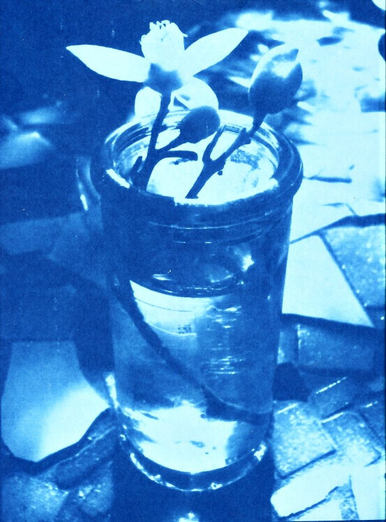 Cyanotype print of orange blossom in a glass jar
