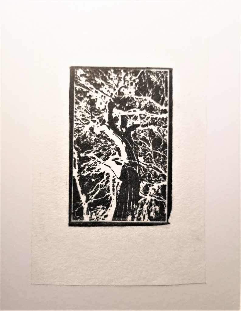 Photopolymer relief etching of snow gum tree